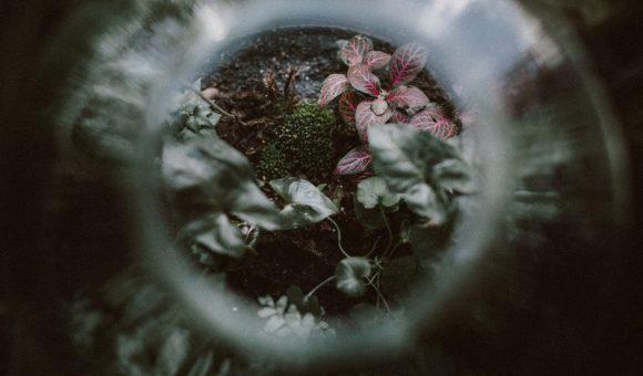 Photographes et vidéastes, comment limiter son impact environnemental ?